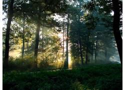 113960,地球,森林,壁纸