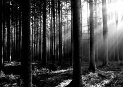 113987,地球,森林,壁纸