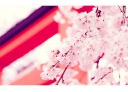 114150,地球,花,花,花,粉红色,花,壁纸