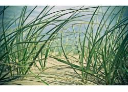 114152,地球,草,壁纸图片