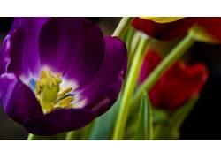 116771,地球,郁金香,花,花,壁纸图片