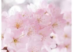 114159,地球,花,花,花,粉红色,花,壁纸