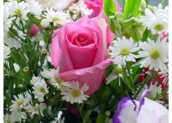 116788,地球,花,花,玫瑰,粉红色,玫瑰,壁纸图片