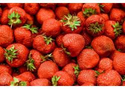 食物,草莓,水果,水果,浆果,壁纸