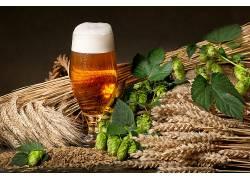 829160,食物,啤酒,玻璃,酒精,喝酒,仍然,生活,植物,跳舞,壁纸
