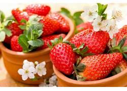 830374,食物,草莓,水果,水果,浆果,白色,花,壁纸