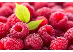 885050,食物,覆盆子,水果,浆果,特写镜头,壁纸图片