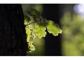166770,地球,叶子,橡树,壁纸