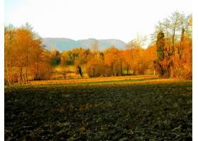 189243,地球,风景,自然,树,秋天,壁纸