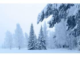 196396,地球,冬天的,风景,风景优美的,季节,雪,森林,壁纸