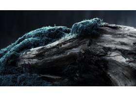 146666,地球,苔藓,蓝色,树,壁纸