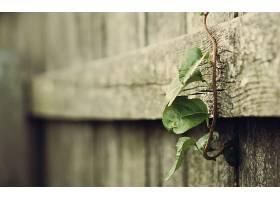 212258,地球,叶子,花,绿色的,壁纸