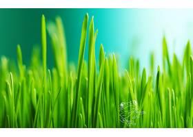 220240,地球,草,青蛙,绿色的,壁纸