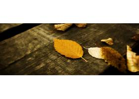 220247,地球,叶子,壁纸
