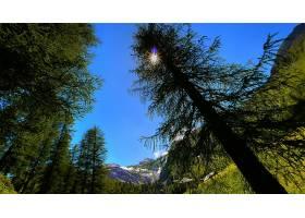 168902,地球,树,树,壁纸