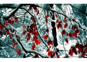 184306,地球,冬天的,摄影,自然,壁纸