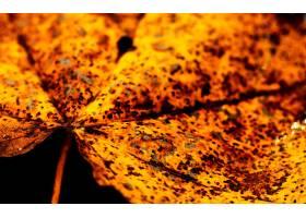 168997,地球,叶子,秋天,自然,壁纸