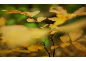 169672,地球,叶子,壁纸