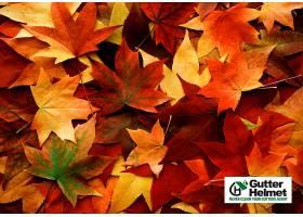 179080,地球,叶子,秋天,感恩节,壁纸