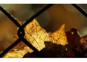 170036,地球,叶子,壁纸