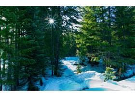 204720,地球,冬天的,森林,树,壁纸图片