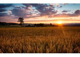 286568,地球,小麦,日落,风景,领域,壁纸