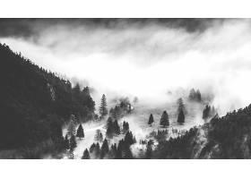 848964,地球,雾,自然,黑色,白色,树,壁纸图片