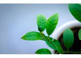 286898,地球,叶子,绿色的,壁纸