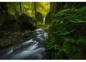 884776,地球,溪流,自然,温室,瀑布,蕨,苔藓,壁纸