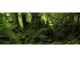 288604,地球,森林,苔藓,壁纸
