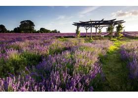 285290,地球,淡紫色,花,风景,壁纸