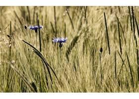 285776,地球,草,花,壁纸