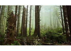 285822,地球,森林,壁纸