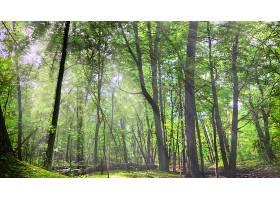 248778,地球,阳光,森林,树,壁纸