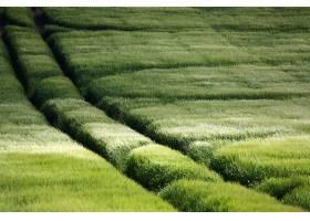 262419,地球,草,壁纸