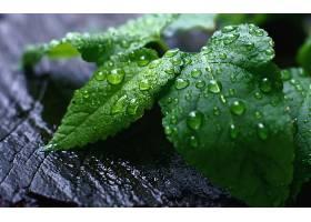 257910,地球,叶子,水,滴,壁纸
