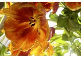 268530,地球,郁金香,花,花,壁纸