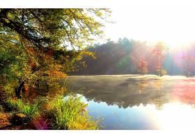 245663,地球,秋天,雾,风景,树,湖,池塘,季节,反射,壁纸