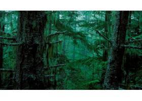 236071,地球,森林,树,绿色的,壁纸
