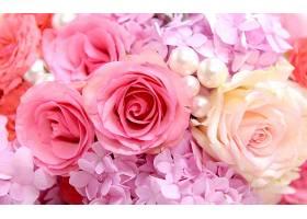 247403,地球,花,花,玫瑰,绣球花,壁纸