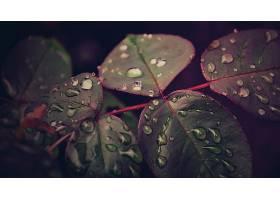 247566,地球,叶子,水,滴,壁纸
