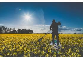 运动,冲浪,领域,油菜籽,黄色,花,夏天,花,天空,太阳,壁纸