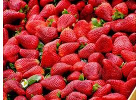 食物,草莓,水果,水果,浆果,红色,壁纸