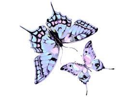 水彩画淡紫色蝴蝶