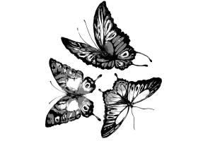 水彩画黑色蝴蝶