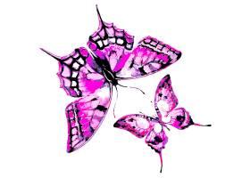 漂亮的紫色蝴蝶