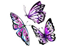 翩翩起舞的蝴蝶