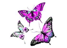 三只紫色蝴蝶