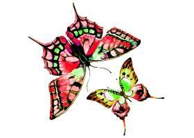 两只彩色蝴蝶