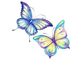 两只美丽的水彩画蝴蝶